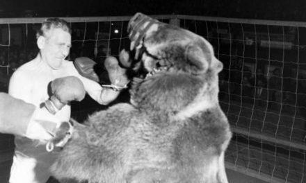 Pogledajte boks borbu između medveda i čoveka! (VIDEO)